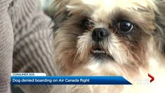 Owner Has Questions After Air Canada Doesn T Allow Her Dog To