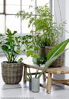 Green plants on a rustic bench, urban jungle. More inspiration at www.karinecandicekong.com