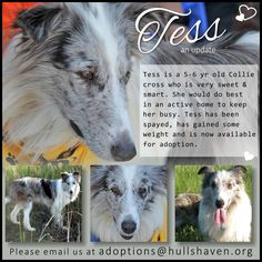 Tess is ready for her forever home! Foster Parenting, Heavenly, The Fosters, Fails, Congratulations, Adoption, Creatures, Club, Dog