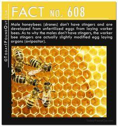 TIFO Quick Fact 608