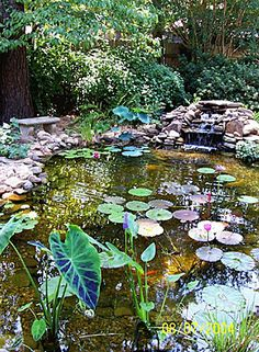 Makes me homesick! My parents have a beautiful pond a lot like this one in their garden.