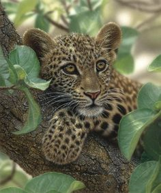 images of tree huggers | Tree Hugger – realistic painting of a young leopard by artist Collin ...