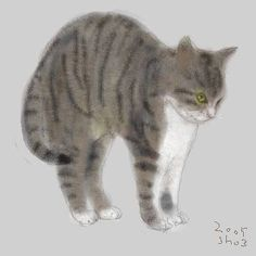 Shozo Ozaki -- big kitty stretch Image Chat, Oriental Cat, Watercolor Cat, Cat Drawing, Pet Birds, Beautiful Cats, Dog Art, Cool Cats, Pet Portraits