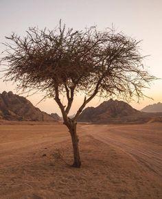 Sinai desert : ILoveSharmElSheikh