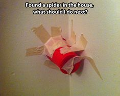 How to react when you see a spider...