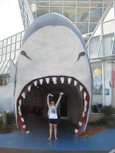 Big Shark, Myrtle Beach, South Carolina, USA Source by store South Beach Florida, Myrtle Beach South Carolina, North Myrtle Beach, Florida Beaches, Carolina Usa, Family Vacation Spots, Vacation Trips, Vacation Ideas, Myrtle Beach Vacation