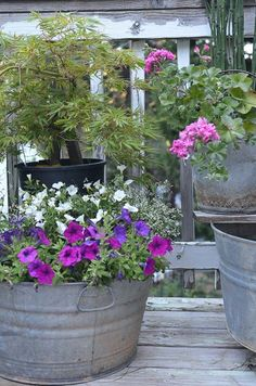 Galvanized Tubs and Buckets Container Garden is part of Container garden Window Boxes - Galvanized tubs and buckets container garden What a fun way to get a cottage farmhouse feel to your front porch or patio setting Container Gardening Vegetables, Container Plants, Flower Containers, Flower Boxes, Garden Yard Ideas, Garden Planters, Tree Garden, Garden Landscaping, Bucket Gardening