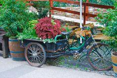 bicycle planter in Rudesheim, Germany #Rudesheim