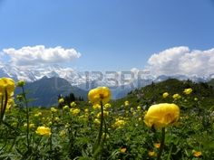 Picture of mountain panorama from Schynige Platte, switzerland stock photo, images and stock photography. Mountain View, Switzerland, Stock Photos, Spaces, Creative, Illustration, Nature, Pictures, Photography