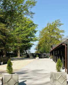 The courtyard at the Deer shed, Bangor Farm, Christchurch, Darfield Bangor, Oak Tree, Wedding Bells, New Zealand, Deer, Wedding Venues, Sidewalk, Wedding Reception Venues, Wedding Places