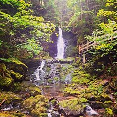Camping in nature's playground at Fundy National Park.  http://www.tourismnewbrunswick.ca/Products/F/Fundy-National-Park.aspx?utm_source=pinterest&utm_medium=owned&utm_content=2015%2Bpin%2Beng&utm_campaign=tnb%2Bsocial