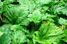 Rhubarb leaves as a mordant when using plant dyes - loads of info on dying naturally