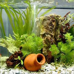 Planted aquariums - Like a real garden