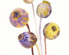 "Poppy Pods - 8"" x 10"" Archival Print"