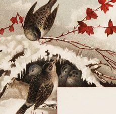 Vintage Winter Birds Label Image! - The Graphics Fairy