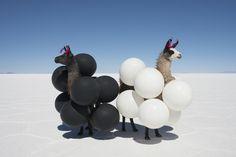 Llamas Black and White Balloons by Gray Malin