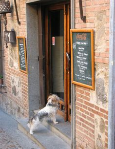 Waiting for a treat in Toledo, Spain Places Around The World, Around The Worlds, Toledo Spain, Seize The Days, Spain And Portugal, New City, Luxury Travel, Caption, Trip Planning