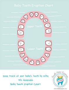 Free Baby Tooth Chart Picture  Barrbarian    Tooth