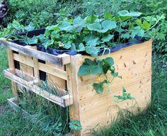Schlechter Boden im Garten? Ich habe ein Hochbeet gebaut und tolle Gartenerde eingefüllt. Jetzt wächst und gedeiht alles ganz wunderbar.
