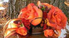 Great roses for fall!  Coffee break and babe orange spray roses.