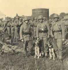 Polish soldiers and war dogs - pin by Paolo Marzioli Poland Ww2, Invasion Of Poland, Military Working Dogs, Military Dogs, War Dogs, Remembrance Day, Survival, Military History, Japan