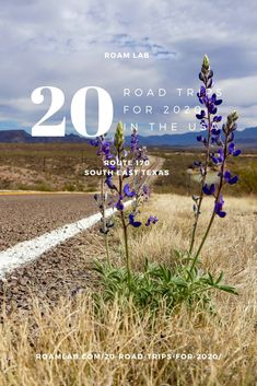 Celebrate 2020 with our 20 top road trips across America. See bison, hit a classic roadside diner, discover odd art sites, and drive on a beach. Badlands National Park, Grand Teton National Park, Rocky Mountain National Park, Yellowstone National Park, National Parks, Mustang Island, Road Trip Across America, Marfa Texas, Visit Texas