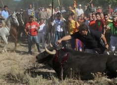 """PLEASE, SIGN THIS PETITION:   https://www.change.org/p/prohibici%C3%B3n-del-torneo-del-toro-de-la-vega  Today is """"El toro de la Vega"""" in Spain. Help us to end with this barbarity! I´m spanish and it´s a shame for me and all people that love animals. #RompesuelasVivo on Twitter. Thank you ❤ Sandy Zomb"""
