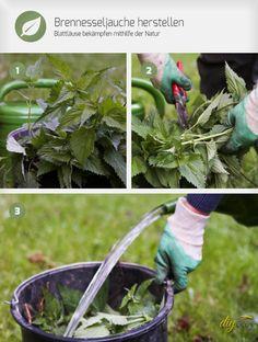 Gegen Blattläuse ist kein Kraut gewachsen? Doch! Brennesseln! Brennesseljauche herstellen und damit erfolgreich Blattläuse bekämpfen. Wir verraten, wie das geht.