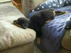 """""""Nope. Comfy. Not moving. Go 'way."""""""