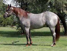 High Brow Cat Son Quarter Horse Stallion Services Little Freckles Cat