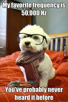 Hipster Dog.  Laughing so hard right now