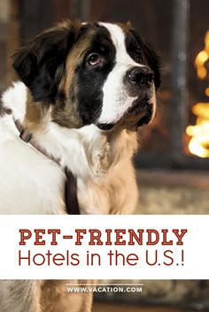 Let There Be Travel And Running 500 Giveaway Pet Friendly Hotelsjet