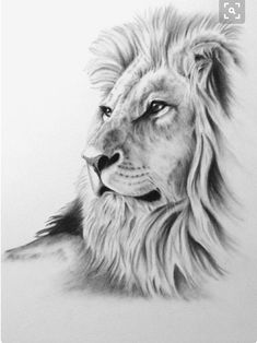 "Charcoal Drawing, 8 ""x ORIGINAL Lion Art, Lion Drawing, Lion Sketch, Charcoal - diy tattoo images - tattoos Animal Sketches, Animal Drawings, Pencil Drawings, Art Sketches, Drawing Animals, Hipster Drawings, Pencil Art, Lion Sketch, Cat Sketch"