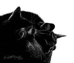Black and Light various prints by PortraitsOfAnimals on Etsy