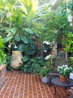 Beautiful tropical plants used on small paved patio.