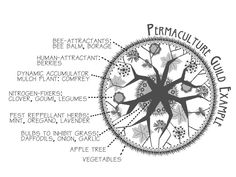 Simple permaculture guild.