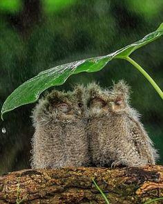 Sous la pluie ...