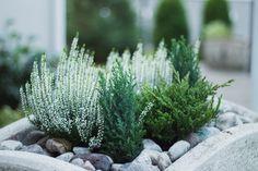Terrace Garden, Garden Pots, Container Plants, Container Gardening, Hanging Flower Baskets, Flower Farmer, Balcony Plants, Garden Angels, Garden Features