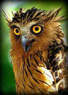 Eule #owl