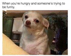 e0ca45c68f03c0466bbf932cf7fee693 funny dog faces dog memes pin by mark mertz on life as a server pinterest,Funny Dog Face Meme