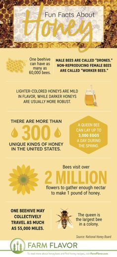 Honey Bee Facts, Male Bee, Farm Facts, American Agriculture, Honey Lime Dressing, Honey Recipes, Baking Recipes, Honey Glaze, Beekeeping