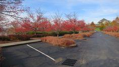 Parking lot Dia Beacon, Beacon Park, Park Landscape, Landscape Architecture, Landscape Design, Parking Lot, Car Parking, Salem Lot, Meditation Garden