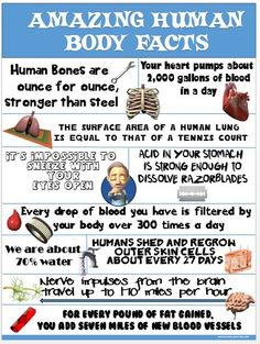 Health and PE Poster: Amazing Human Body Facts