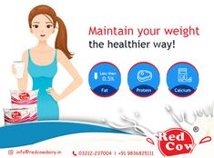Maintain your weight in healthy way by drinking Red Cow Dairy Milk daily To order Red Cow Dairy Milk Call: 9836825111 Drinking, Cow, Dairy, Milk, India, Healthy, Drinks, Drink, Goa India
