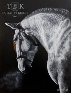 White Horse 07 - Oil on Canvas – 50 x 70 cm