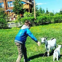 """ТК """"Ярославна"""" отдых, мини-ферма, контактный зоопарк"""