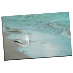 Portfolio Canvas Decor By the Sea by Elizabeth Urquhart Framed Graphic Art on Wrapped Canvas