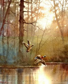 Duck Art Print of Watercolor Painting by Master Artist by TCChiu Watercolor Bird, Watercolor Landscape, Landscape Art, Landscape Paintings, Watercolor Paintings, Watercolours, Postmodern Art, Duck Art, Guache