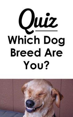 Quiz Which Dog Breed Are You With Images Dog Quizzes Dog Quiz Dogs