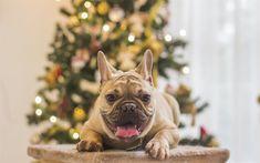 4k, Happy New Year 2018, french bulldog, year of dog, Christmas 2018, creative, New Year 2018, xmas, Christmas tree